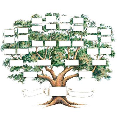 curso árbol genealógico